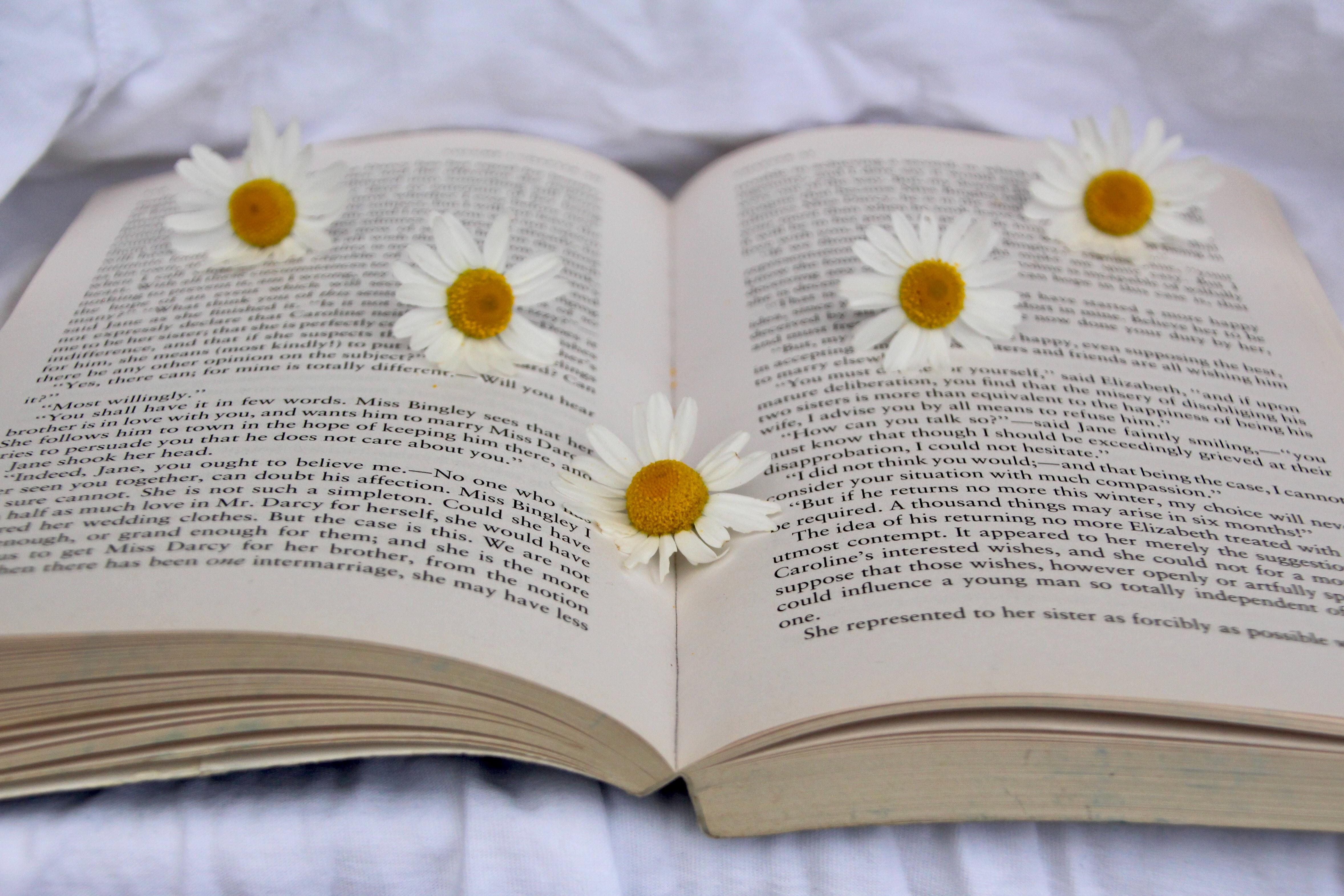 Agenzia letteraria maestri e margherite libri e fiori